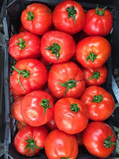 تصویر گوجه